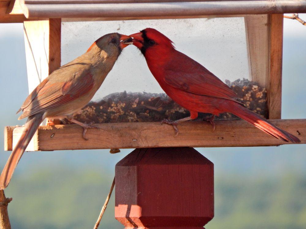 DeborahYaworsky_cardinal.jpg