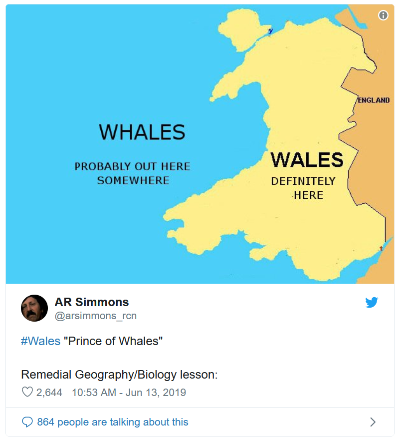 whales 4.png