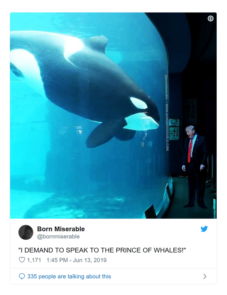 whales 5.png