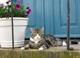 Porch purr.jpg