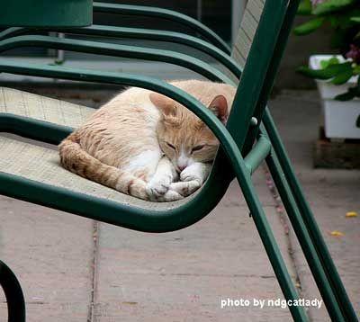 Porch nap.jpg