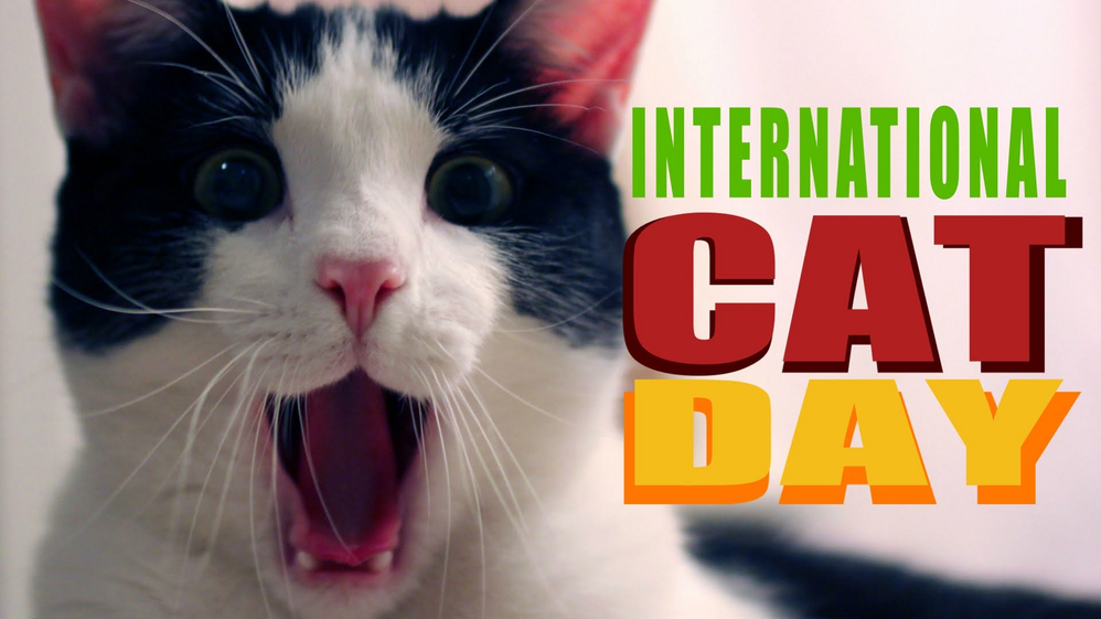 international cat day 2.png