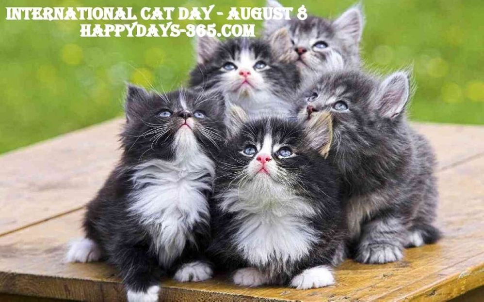 international cat day.jpg