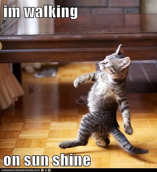 cat walking in sunshine.jpg