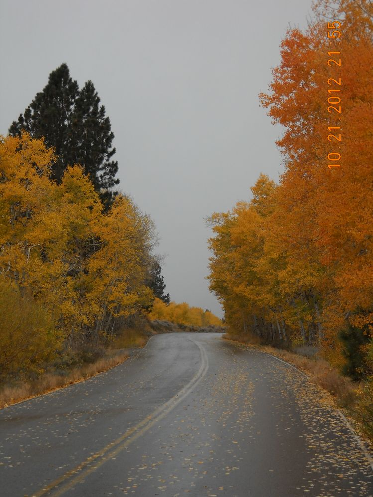 On the road to Lundy Lake.jpg