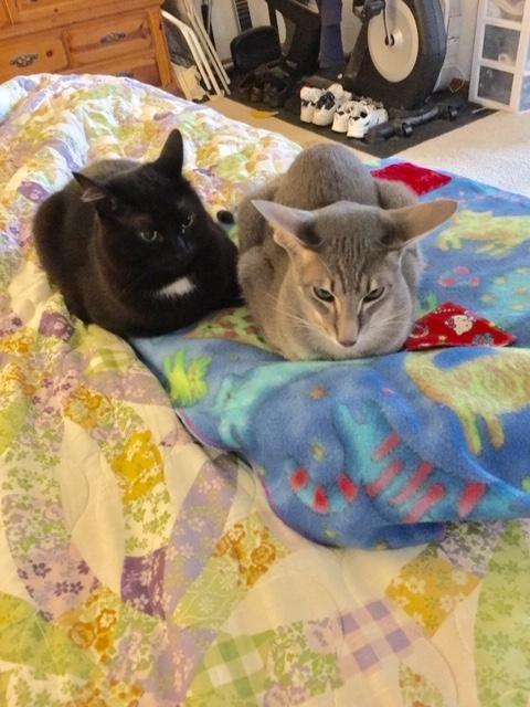 Edgar and Aki  sends Meowy Catmas