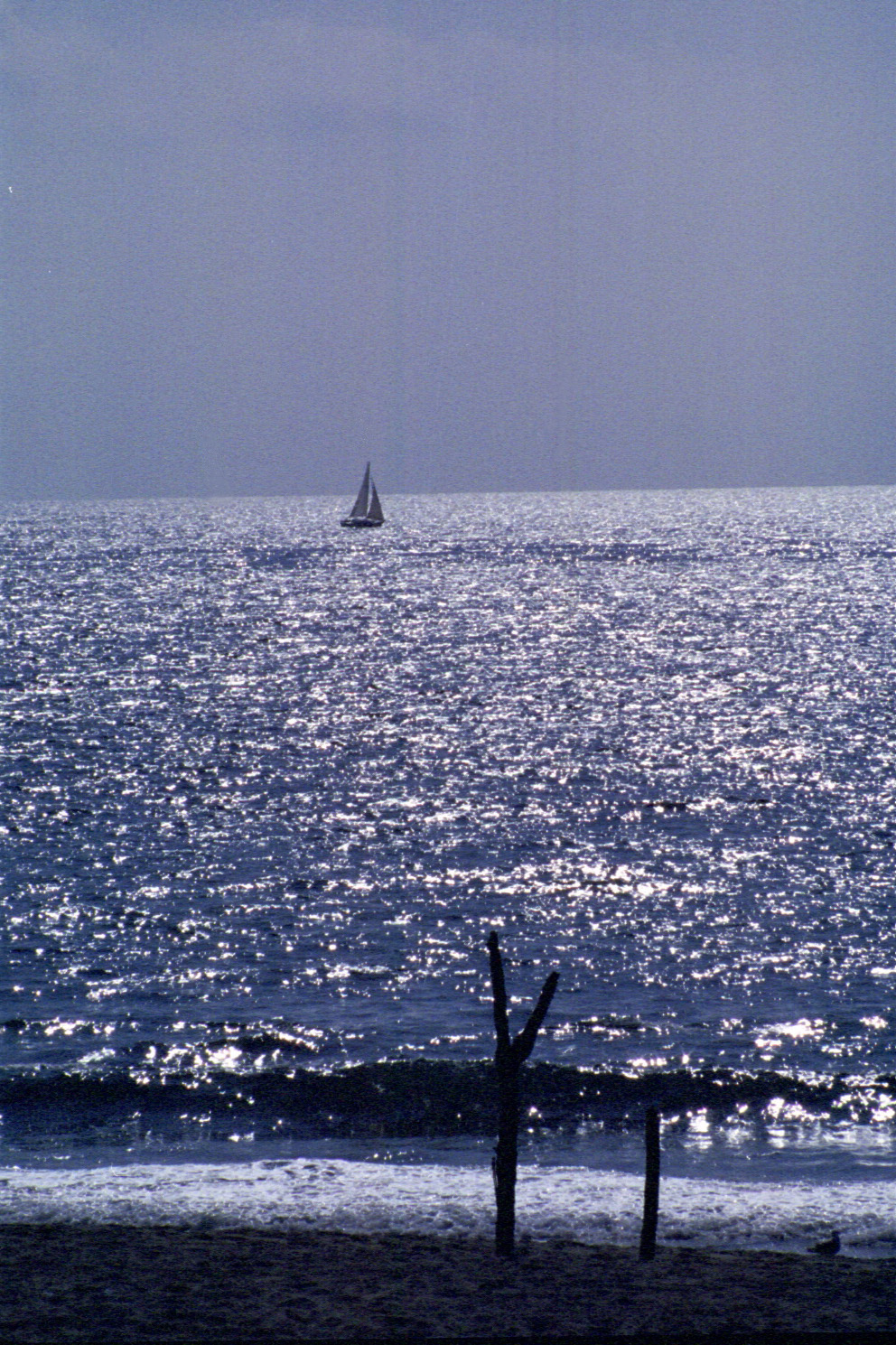 Sailboat off Redondo ii.JPG